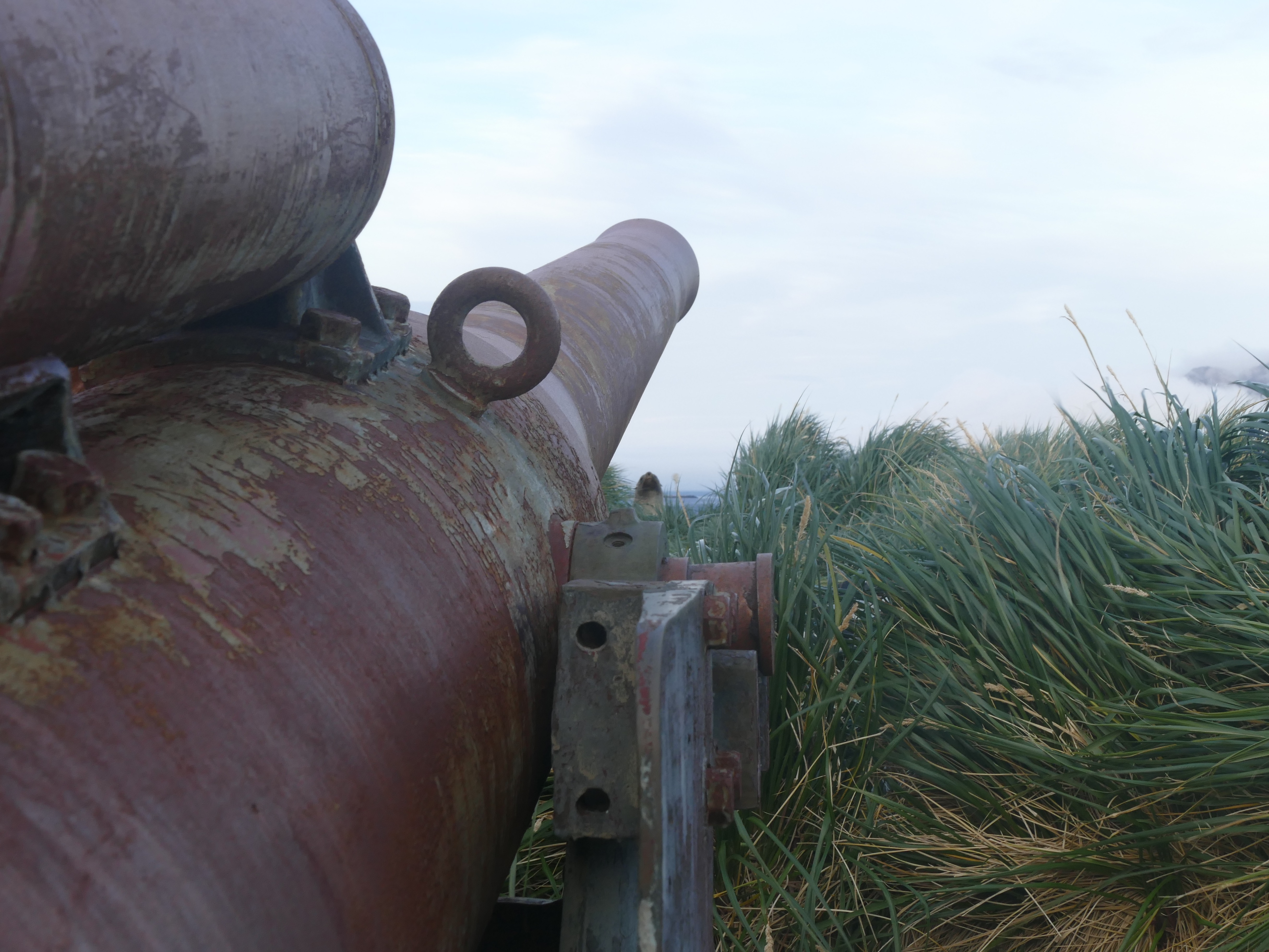 Gun (and seal) on the headland above Stromness, protecting Leith