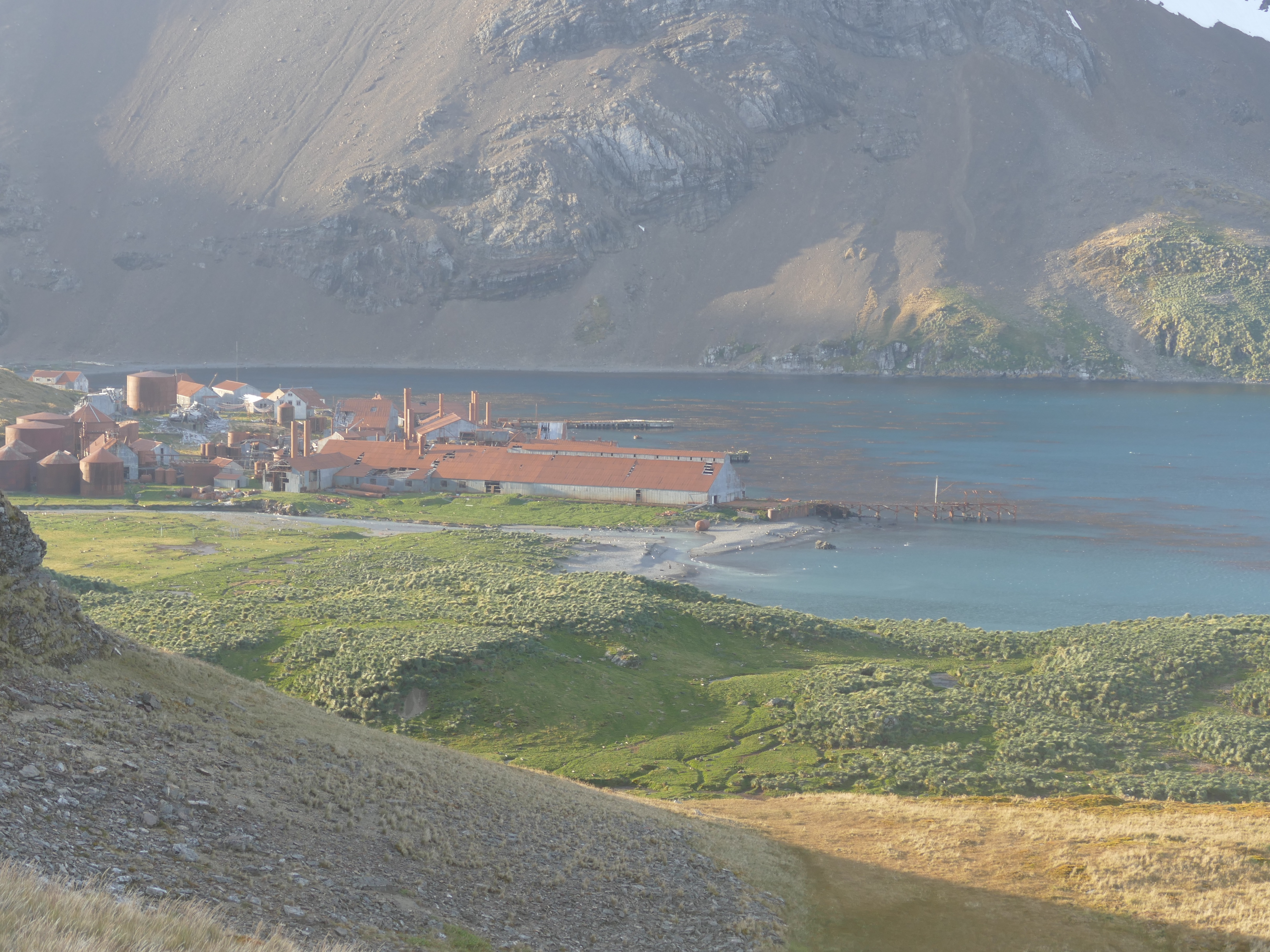 Leith whaling station from the headland above Stromness