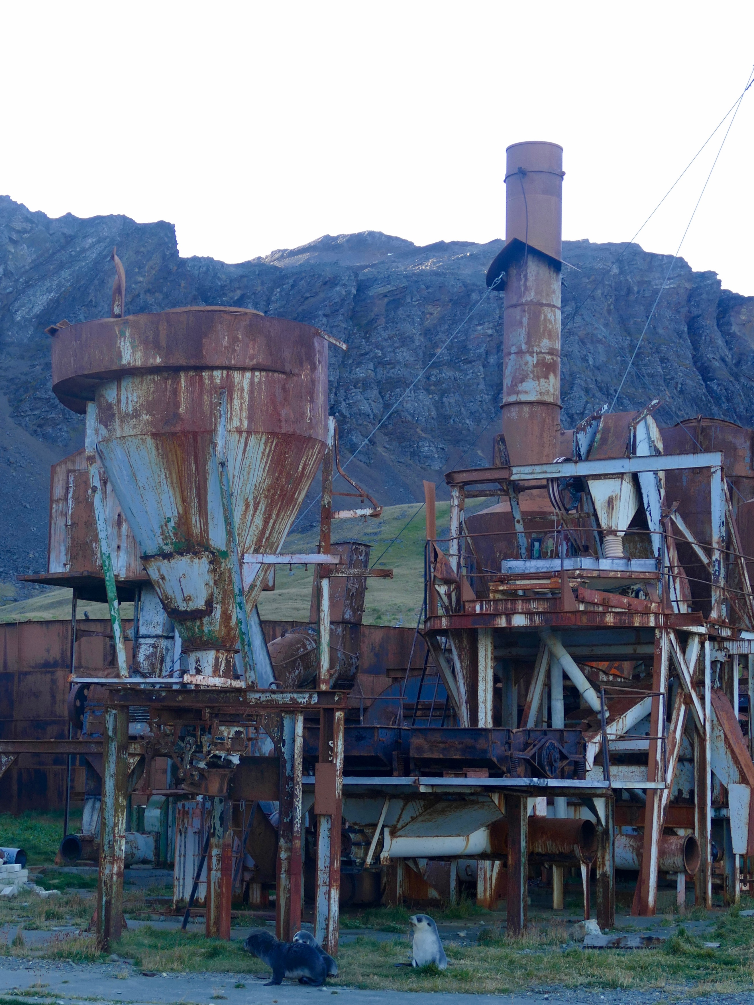 Fur seals and whaling factory in Grytviken