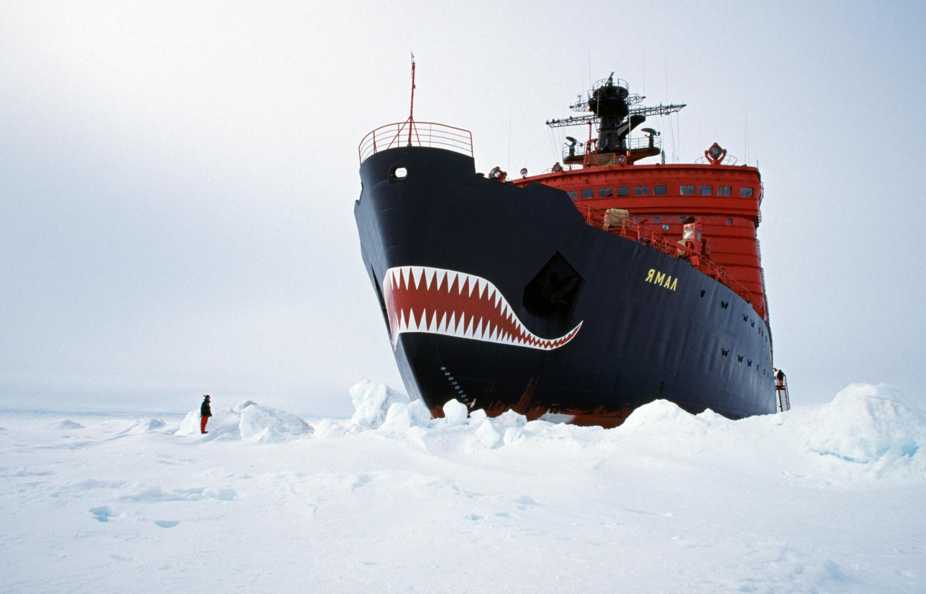 Oil in use and as as prey in the Arctic